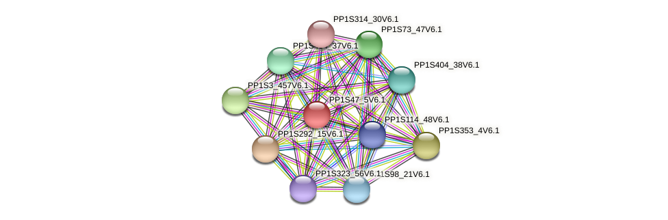 PP1S47_5V6.1 protein (Physcomitrella patens) - STRING interaction network