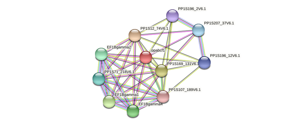 ppabcf1 protein (Physcomitrella patens) - STRING interaction network