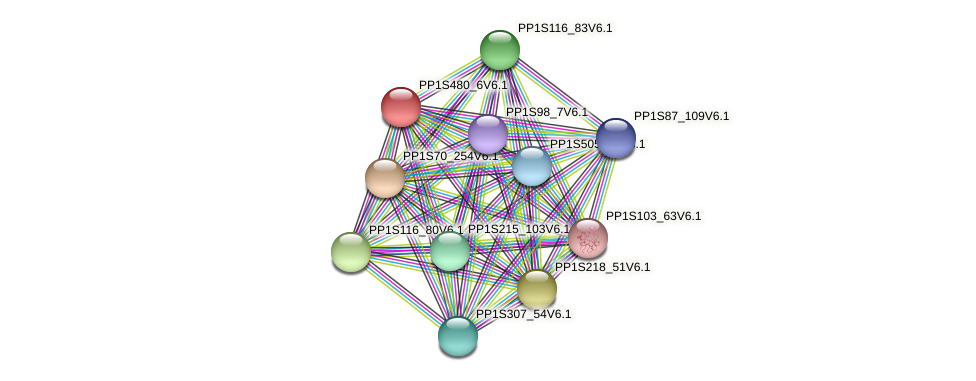 PP1S480_6V6.1 protein (Physcomitrella patens) - STRING interaction network