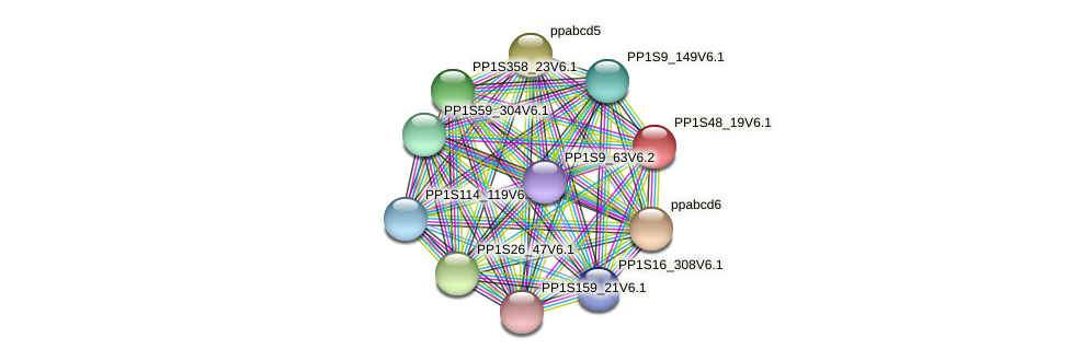 PP1S48_19V6.1 protein (Physcomitrella patens) - STRING interaction network