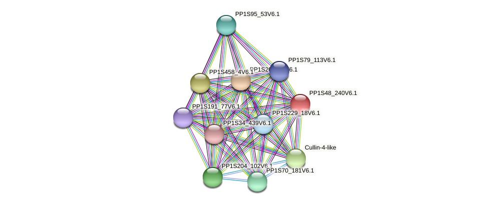 PP1S48_240V6.1 protein (Physcomitrella patens) - STRING interaction network