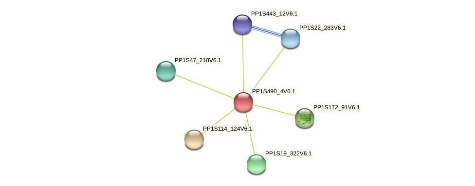 PP1S490_4V6.1 protein (Physcomitrella patens) - STRING interaction network