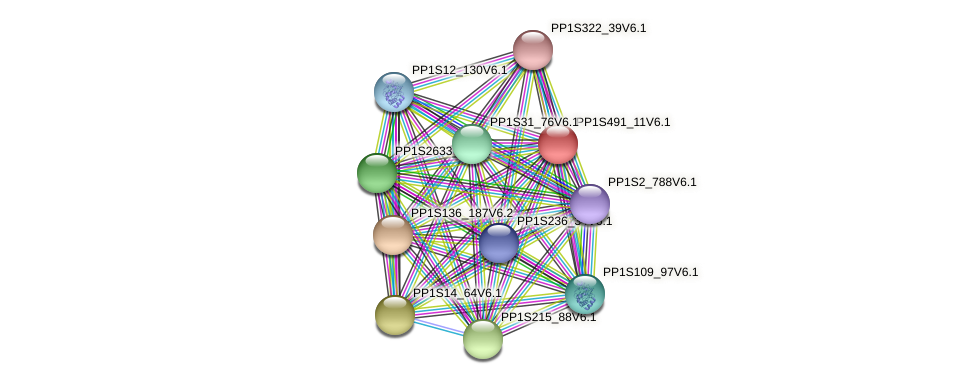 PP1S491_11V6.1 protein (Physcomitrella patens) - STRING interaction network