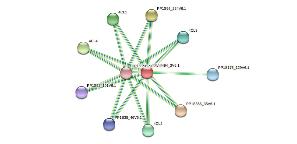PP1S494_3V6.1 protein (Physcomitrella patens) - STRING interaction network