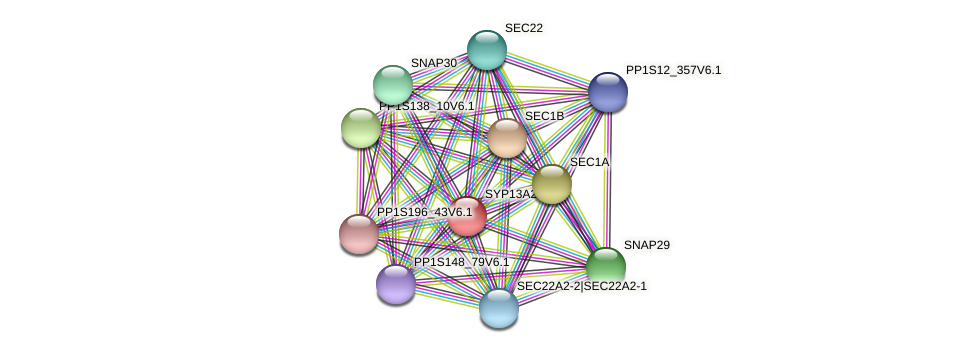 SYP13A2 protein (Physcomitrella patens) - STRING interaction network
