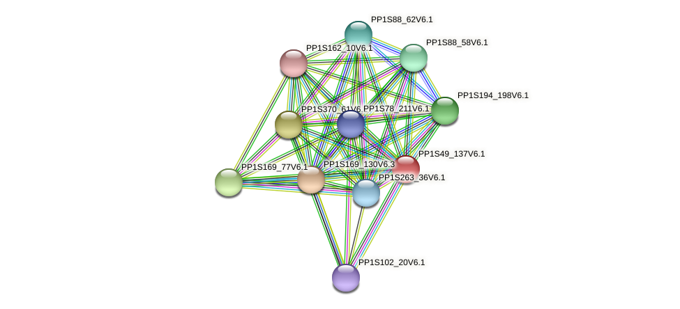 PP1S49_137V6.1 protein (Physcomitrella patens) - STRING interaction network