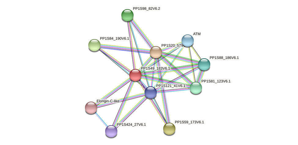 PP1S49_183V6.1 protein (Physcomitrella patens) - STRING interaction network