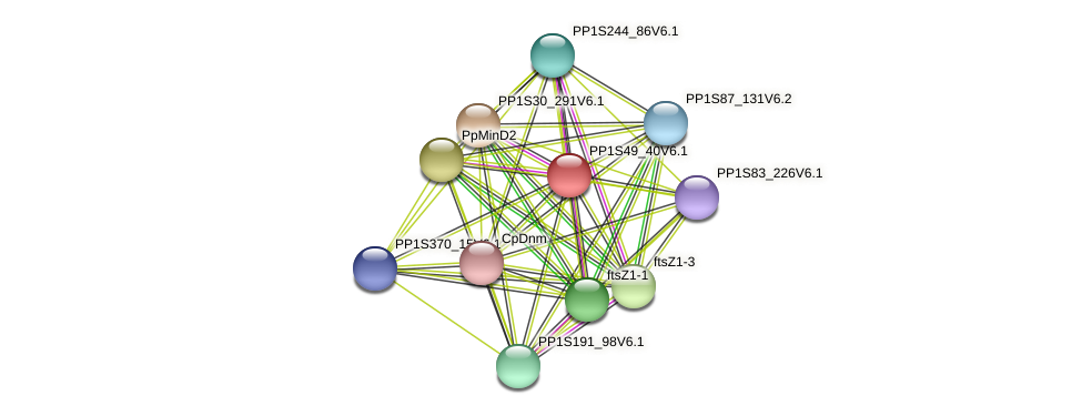 PP1S49_40V6.1 protein (Physcomitrella patens) - STRING interaction network