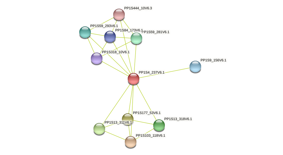 PP1S4_237V6.1 protein (Physcomitrella patens) - STRING interaction network