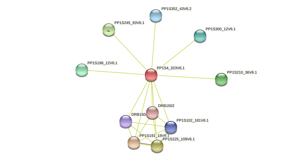PP1S4_323V6.1 protein (Physcomitrella patens) - STRING interaction network