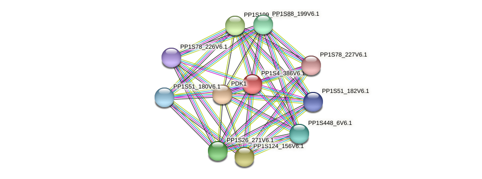PP1S4_386V6.1 protein (Physcomitrella patens) - STRING interaction network