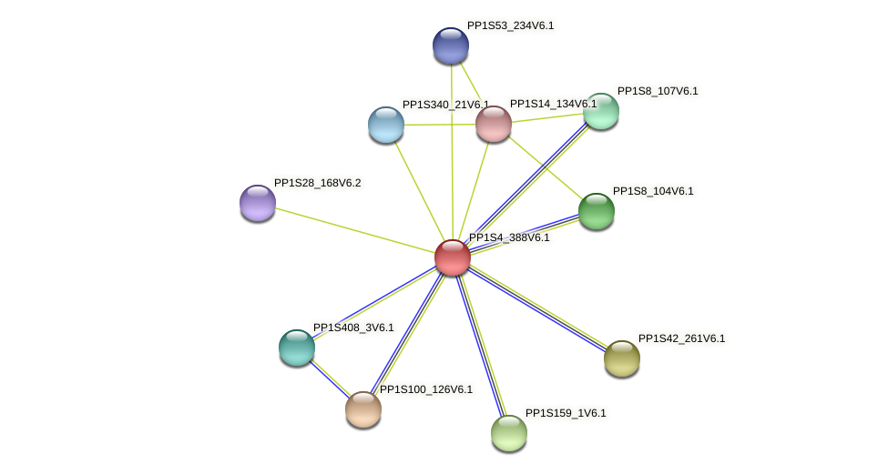 PP1S4_388V6.1 protein (Physcomitrella patens) - STRING interaction network