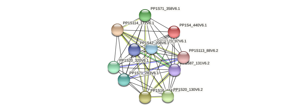 PP1S4_440V6.1 protein (Physcomitrella patens) - STRING interaction network
