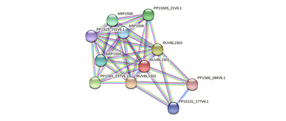 RUVBL1501 protein (Physcomitrella patens) - STRING interaction network