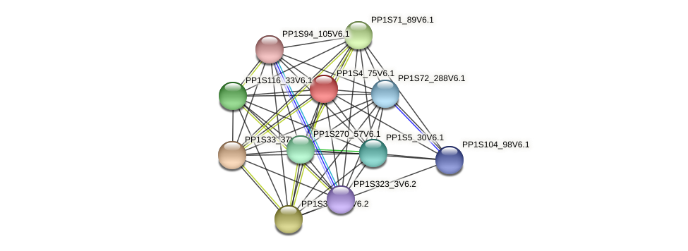 PP1S4_75V6.1 protein (Physcomitrella patens) - STRING interaction network