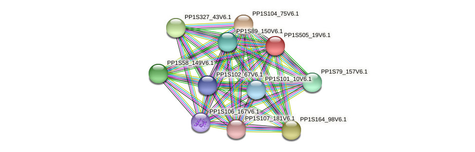 PP1S505_19V6.1 protein (Physcomitrella patens) - STRING interaction network