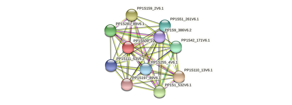 PP1S509_22V6.2 protein (Physcomitrella patens) - STRING interaction network