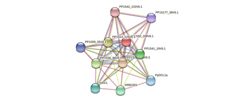 PP1S50_208V6.1 protein (Physcomitrella patens) - STRING interaction network