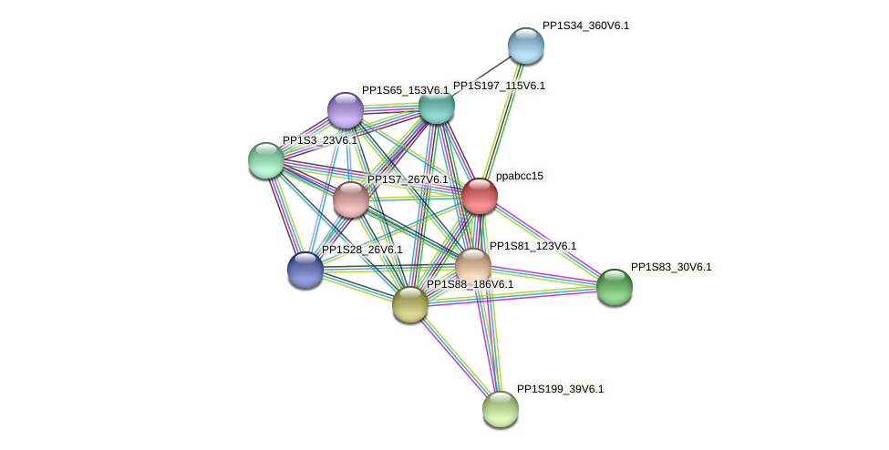 ppabcc15 protein (Physcomitrella patens) - STRING interaction network