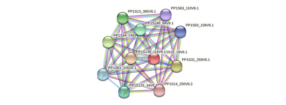 PP1S519_18V6.1 protein (Physcomitrella patens) - STRING interaction network