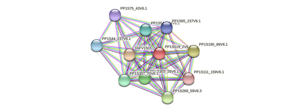 PP1S519_2V6.1 protein (Physcomitrella patens) - STRING interaction network
