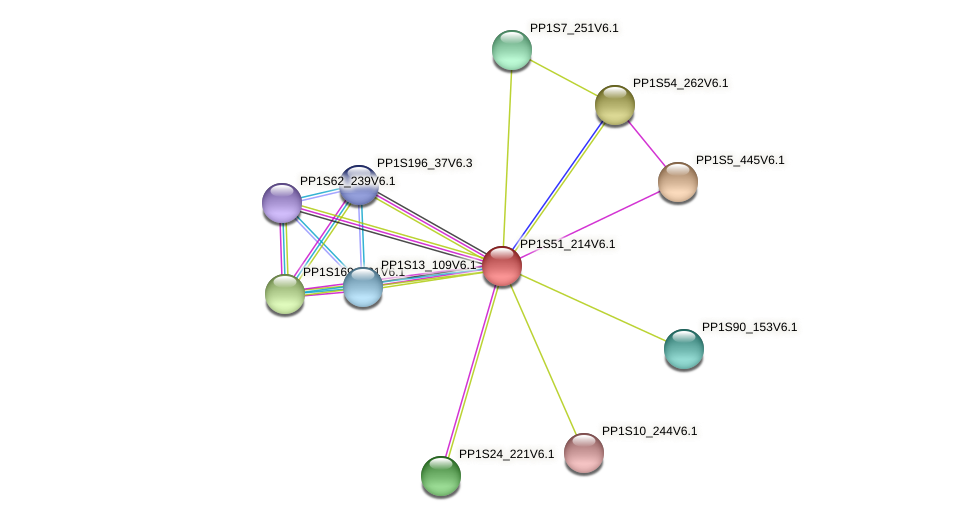 PP1S51_214V6.1 protein (Physcomitrella patens) - STRING interaction network