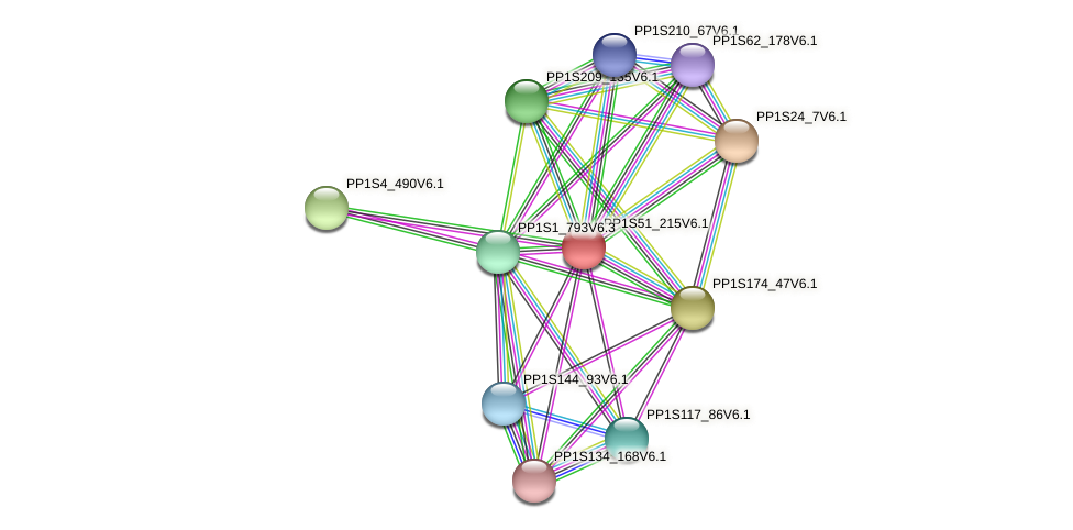 PP1S51_215V6.1 protein (Physcomitrella patens) - STRING interaction network