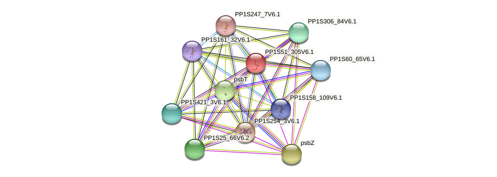 PP1S51_305V6.1 protein (Physcomitrella patens) - STRING interaction network