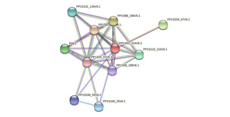 PP1S51_314V6.1 protein (Physcomitrella patens) - STRING interaction network