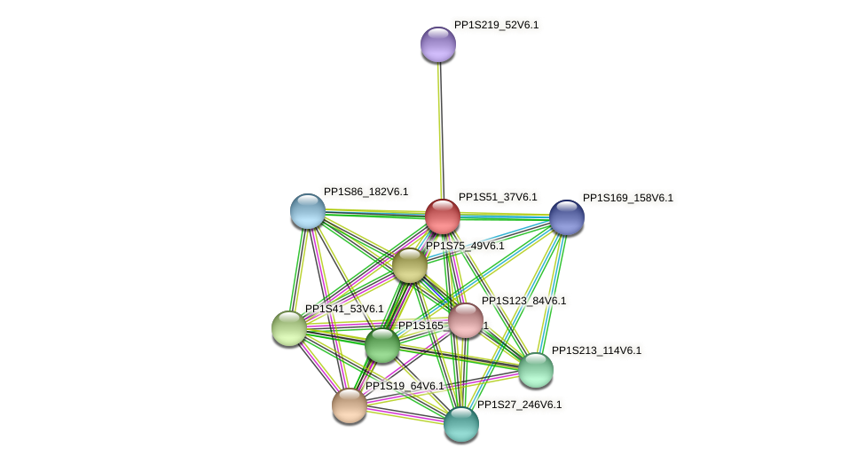 PP1S51_37V6.1 protein (Physcomitrella patens) - STRING interaction network