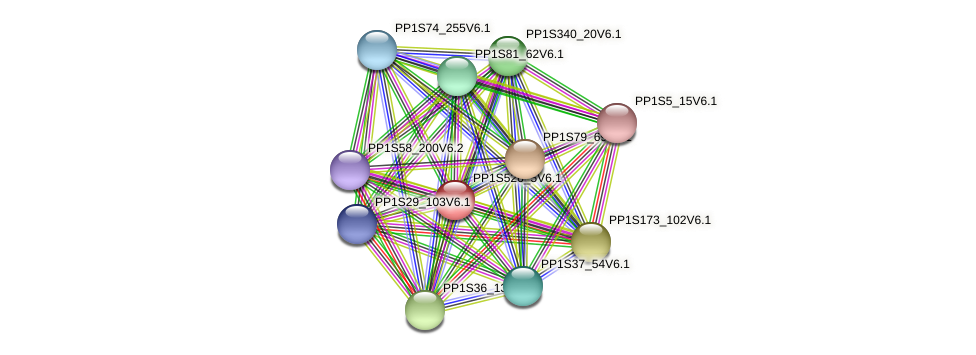 PP1S526_5V6.1 protein (Physcomitrella patens) - STRING interaction network