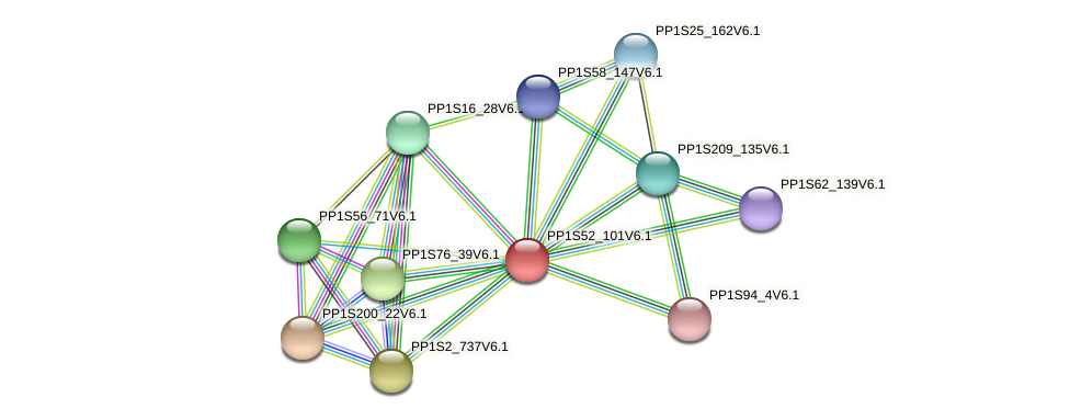 PP1S52_101V6.1 protein (Physcomitrella patens) - STRING interaction network