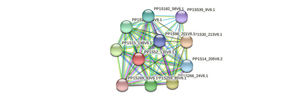PP1S52_135V6.1 protein (Physcomitrella patens) - STRING interaction network