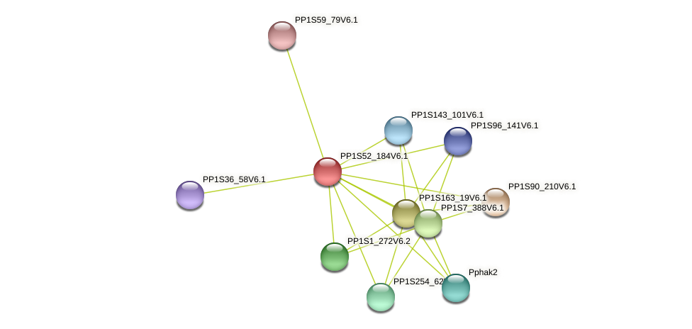 PP1S52_184V6.1 protein (Physcomitrella patens) - STRING interaction network
