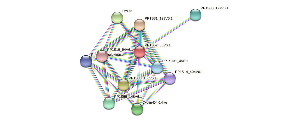 PP1S52_55V6.1 protein (Physcomitrella patens) - STRING interaction network