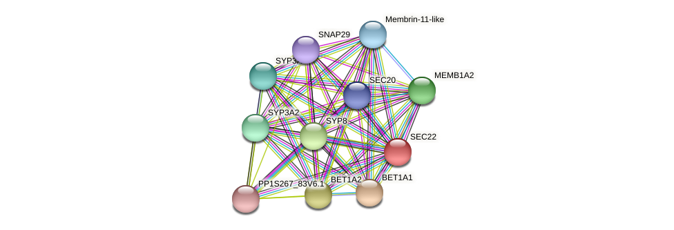 SEC22 protein (Physcomitrella patens) - STRING interaction network