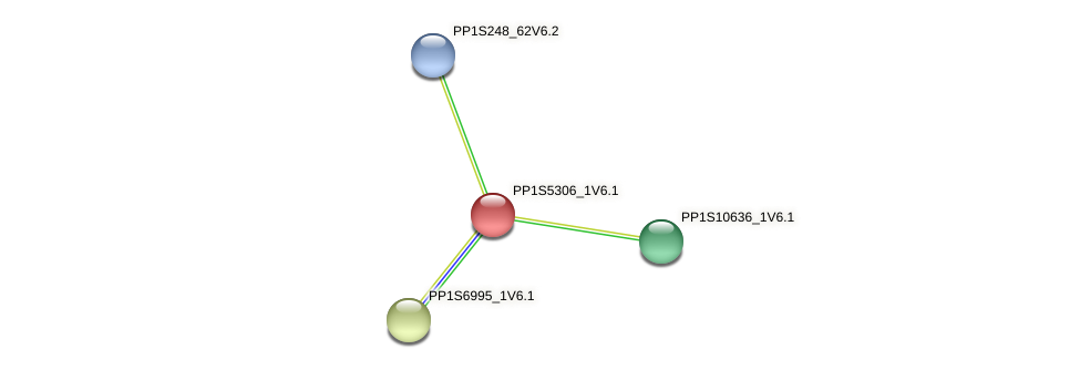 PP1S5306_1V6.1 protein (Physcomitrella patens) - STRING interaction network