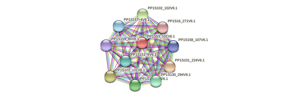 PP1S53_101V6.1 protein (Physcomitrella patens) - STRING interaction network