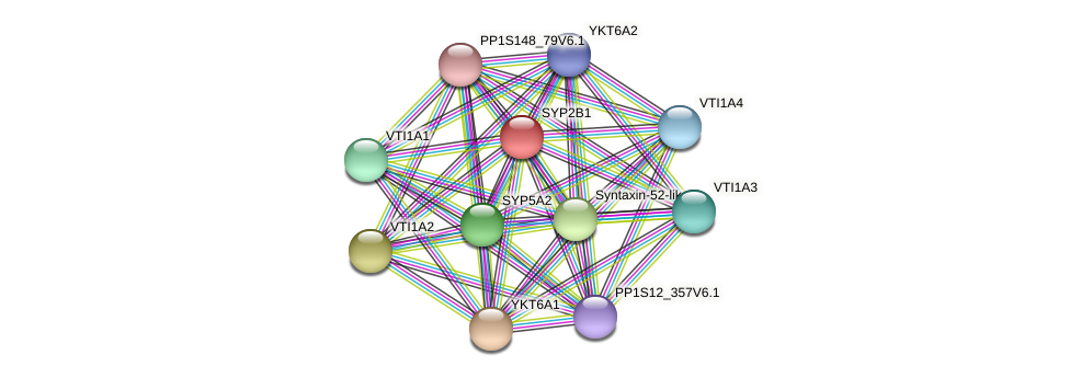 SYP2B1 protein (Physcomitrella patens) - STRING interaction network