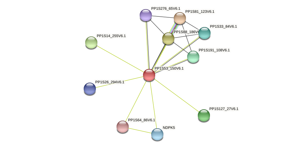 PP1S53_150V6.1 protein (Physcomitrella patens) - STRING interaction network
