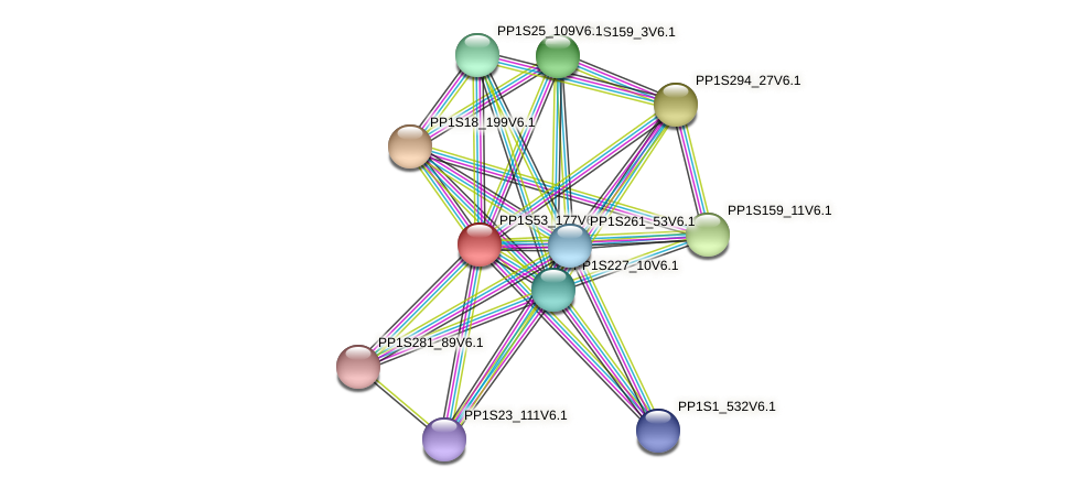 PP1S53_177V6.1 protein (Physcomitrella patens) - STRING interaction network