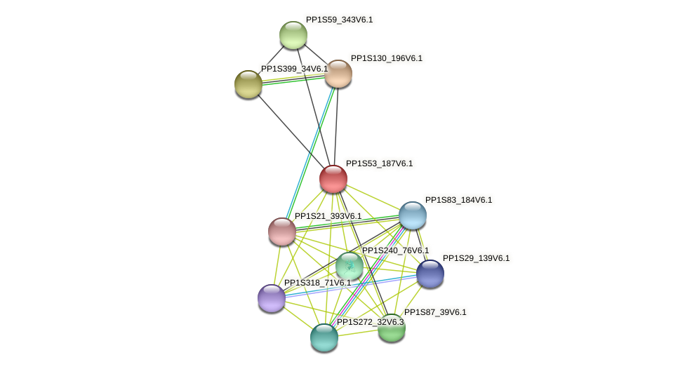 PP1S53_187V6.1 protein (Physcomitrella patens) - STRING interaction network