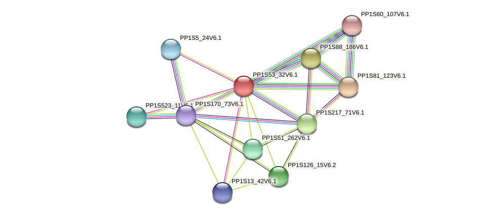 PP1S53_32V6.1 protein (Physcomitrella patens) - STRING interaction network