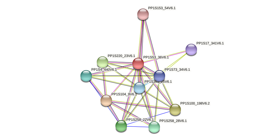 PP1S53_36V6.1 protein (Physcomitrella patens) - STRING interaction network