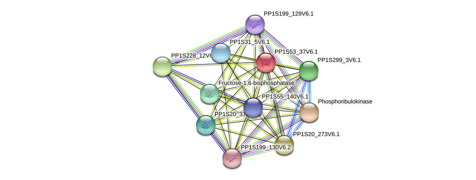PP1S53_37V6.1 protein (Physcomitrella patens) - STRING interaction network