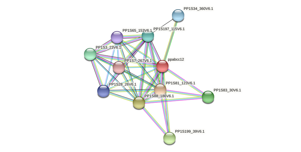 ppabcc12 protein (Physcomitrella patens) - STRING interaction network