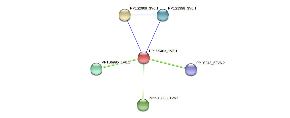 PP1S5463_1V6.1 protein (Physcomitrella patens) - STRING interaction network