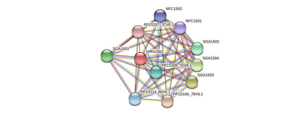 HIRA1502 protein (Physcomitrella patens) - STRING interaction network