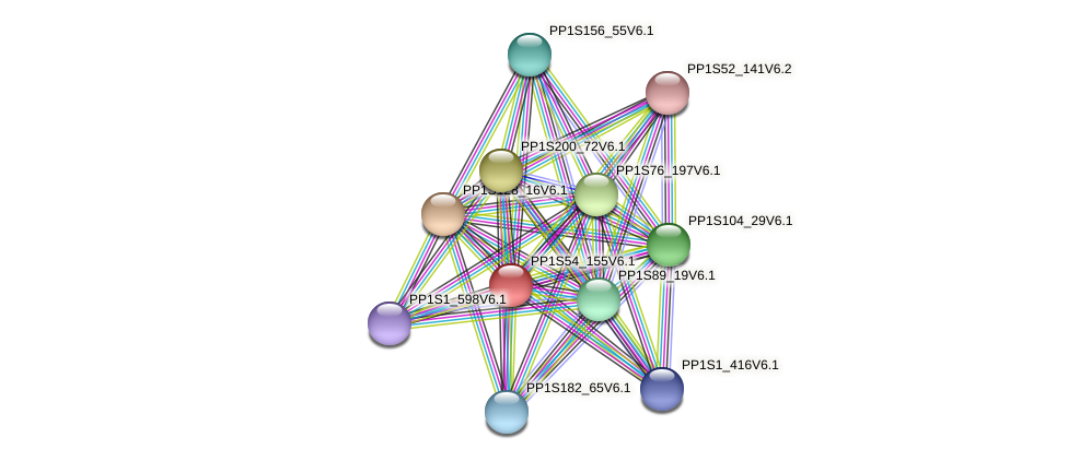 PP1S54_155V6.1 protein (Physcomitrella patens) - STRING interaction network