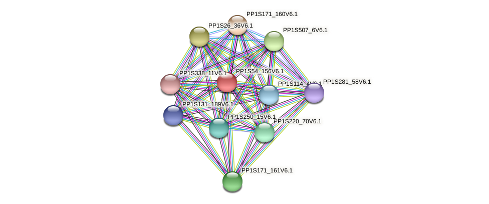 PP1S54_156V6.1 protein (Physcomitrella patens) - STRING interaction network